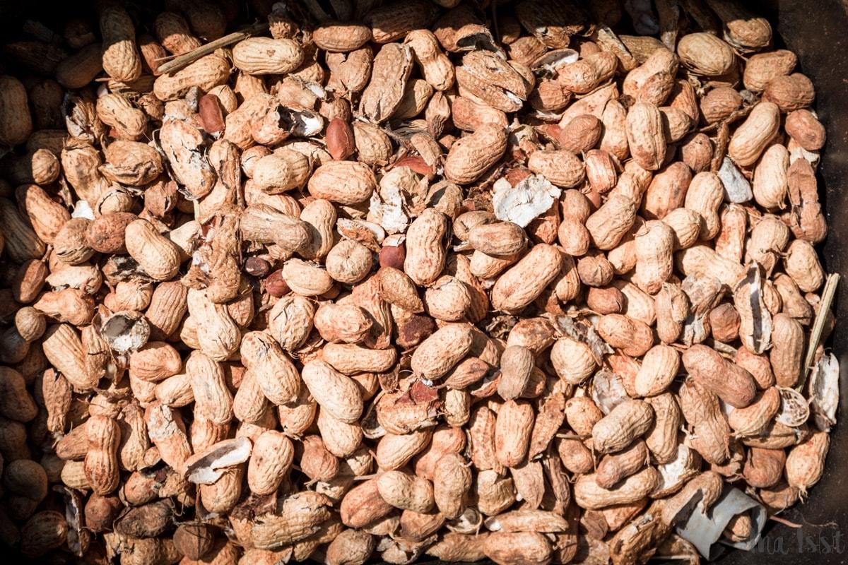 Erdnussernte, Georgia,  Amerika, Peanuts